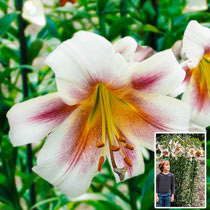 Passion Moon Lily Tree®
