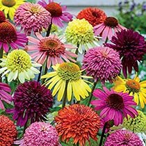 Hybridizer's™  Coneflower Mixture Super Sak®