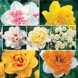Brecks Deluxe Double Daffodil Collection