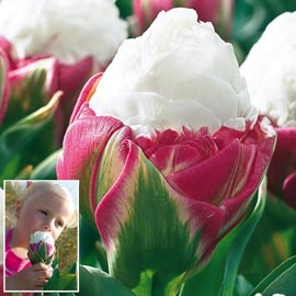 Brecks Ice Cream Tulip
