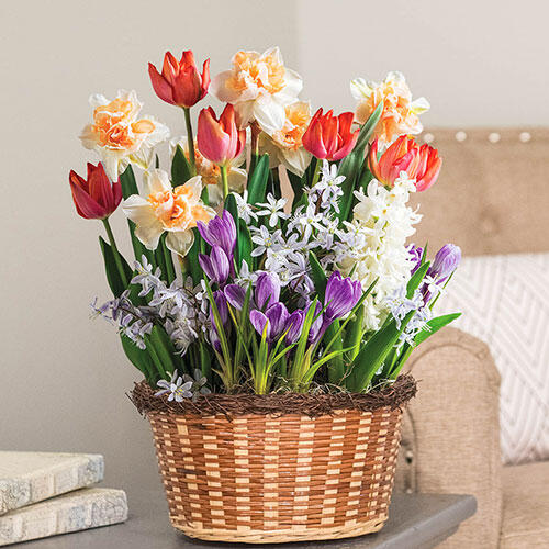 Mixed Spring Bulb Garden