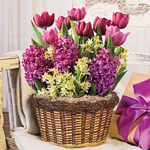 Lavender Beauty Bulb Garden