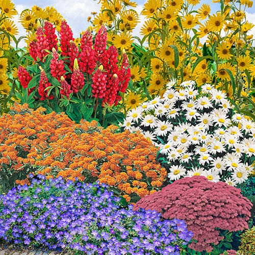 Breck's® Butterfly Cottage Garden Collection