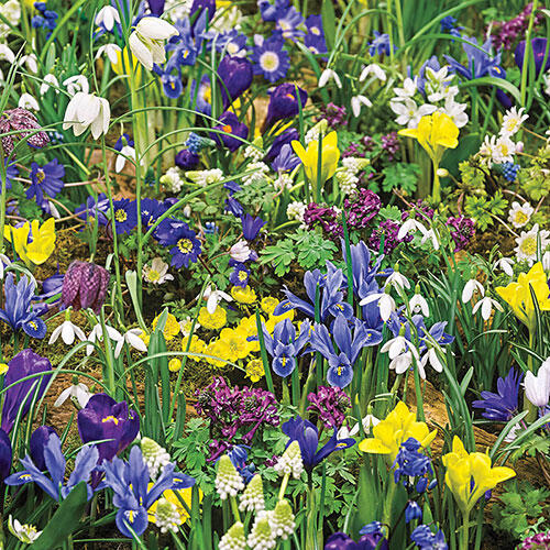 Eternal Spring™ 3-Month Naturalizing Mixture