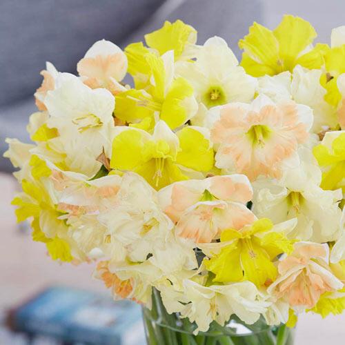 Fluttering Petals Daffodil Mix