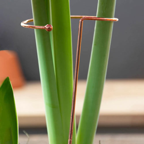 Stackable Amaryllis Stakes
