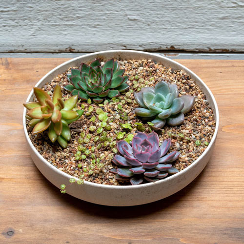 Perfect Planter Succulent Collection