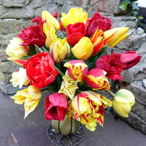 Tropical Fruit Melange Tulip Mixture