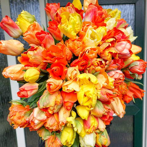 Party Punch Tulip Mixture