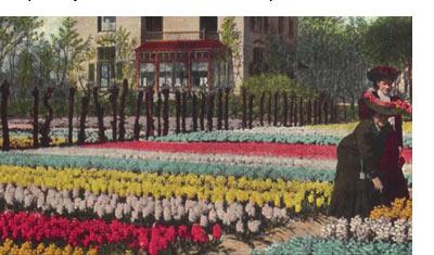 History of Hyacinths