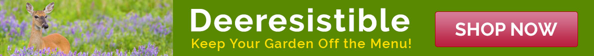 Deer resistant Perennials