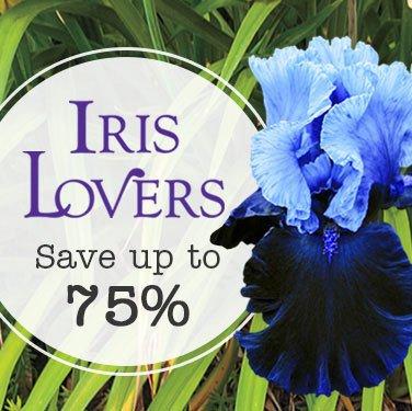 Iris Lovers