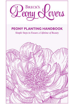 Planting Guide for Peonies