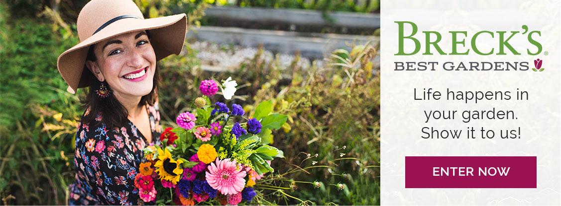Breck's Best Gardens