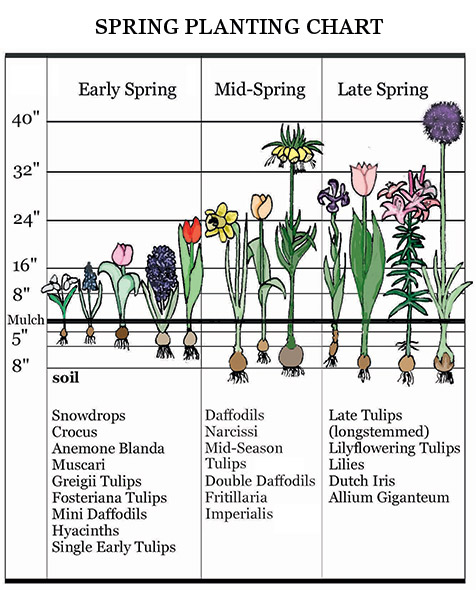 spring planting chart