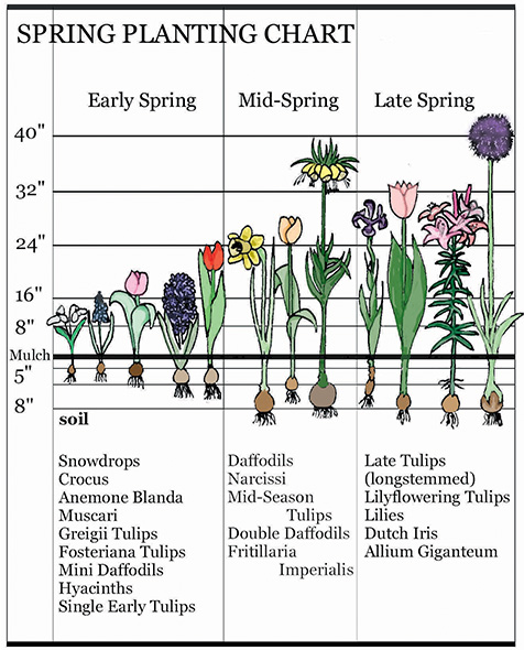 Bloom Time Landscaping With Early Spring Bulbs,Viewing Checklist Questions To Ask When Buying A House Checklist
