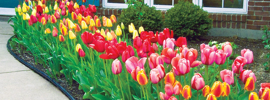 Landscaping with bulbs:Color