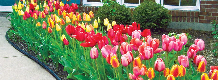 LANDSCAPING WITH BULBS: DESIGN IDEAS AND CONCEPTS - How_to_library_designidea.jpg