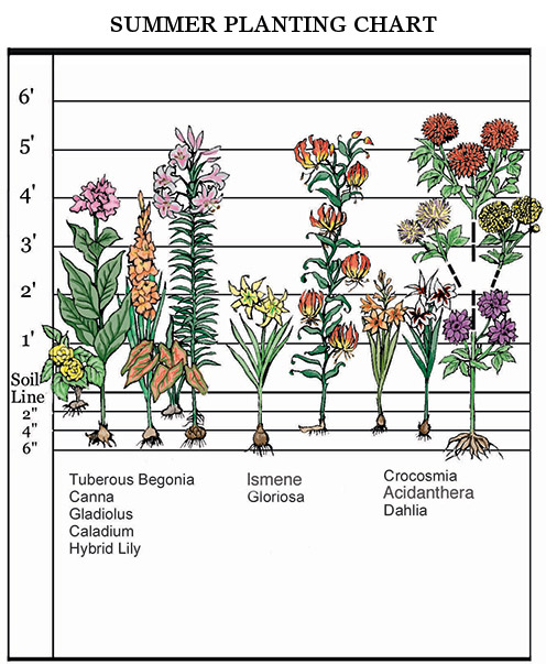 summer planting chart