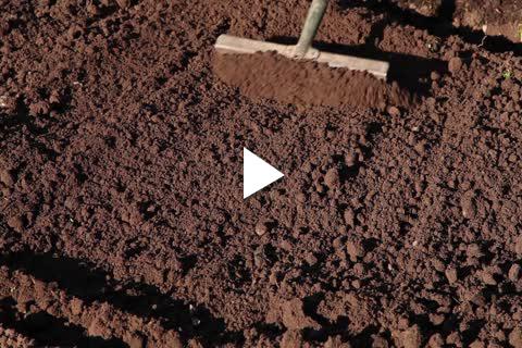 Rhizome - Planting