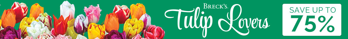 Tulip Lovers
