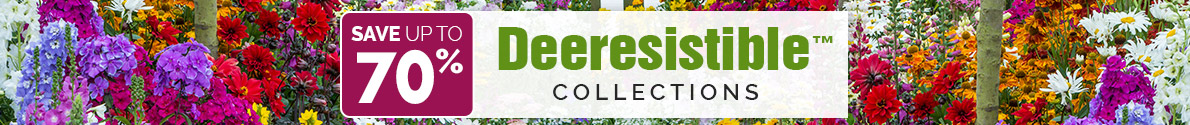 Deeresistible Collections