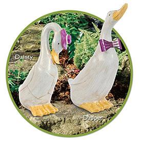 Dapper & Dainty Ducks