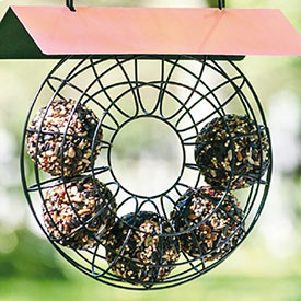 Seed Ball Bird Feeder