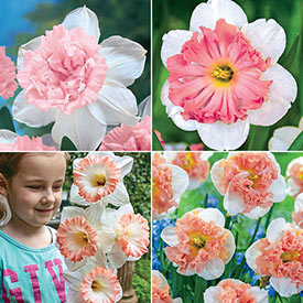 Not Your Every Day Pink Daffodil Collection