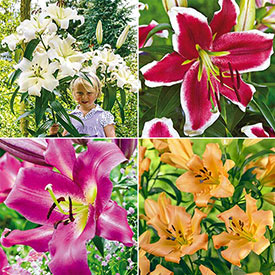Happy Lily Tree® Collection