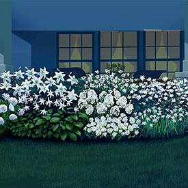20-Plant Mini Moonlight Garden Collection
