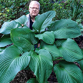 Kingsize Hosta