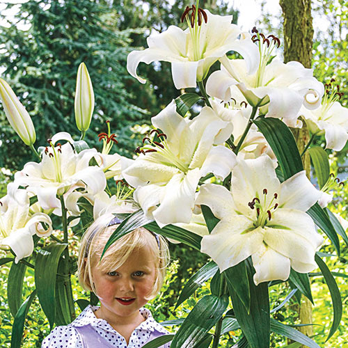 Exquisite Lily Tree Collection