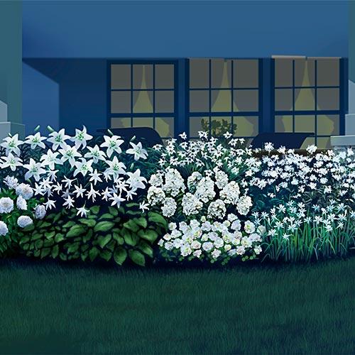 Fragrant Moonlight Garden Collection