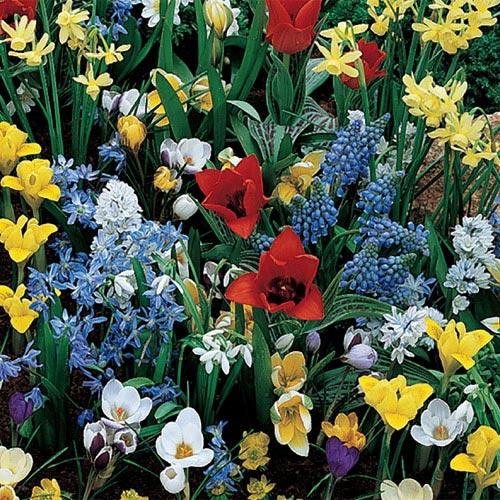 Wildflower Bulb Garden