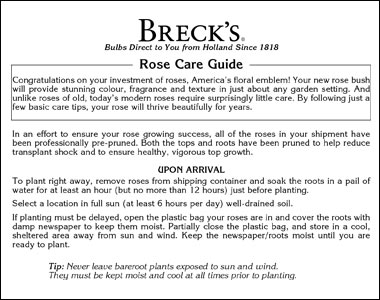Planting Guide for Roses