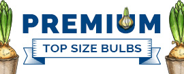 Premium Top Size Bulbs