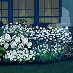 5-Plant Mini Moonlight Garden Collection