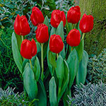 Escape Tulip Super Sak<sup>&reg;</sup>
