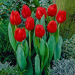 Escape Tulip Super Sak<sup>&reg;</sup>