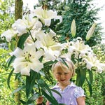 Pretty Woman Lily Tree <sup> &reg; </sup>