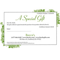 gift 
