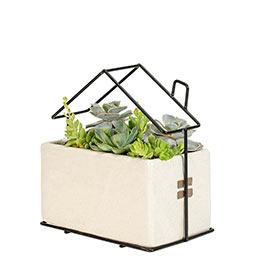 Living Loft Succulent Planter