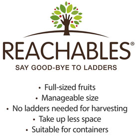 Reachables<sup>®</sup> Golden Delicious Apple Tree