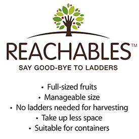 Reachables<sup>®</sup> Fuji Apple Tree