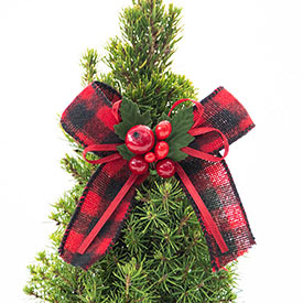 Miniature Spruce Tree
