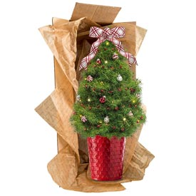 Peppermint Polka Dot Decorated Spruce Tree