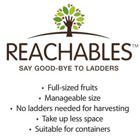 Reachables<sup>®</sup> Fuji Apple Tree