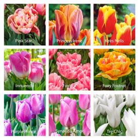 Mystery Tulip Bulb Garden