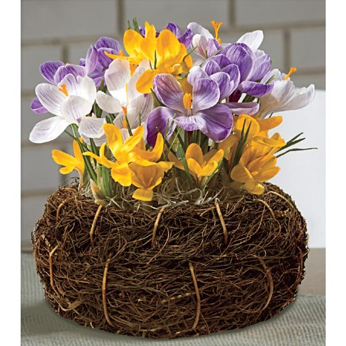 Flower Bulb Gift Baskets : Flowering gifts crocus bulb basket